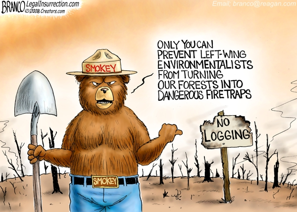 Forest Fires Blamed on Left-wing Environmental Policies
