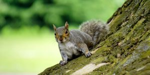 What to Do When Squirrels Infest the Church Building!