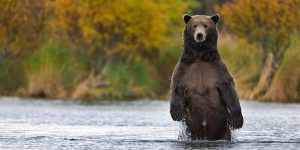 The Pope, a Grizzly Bear, Republicans and Democrats in Alaska